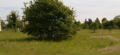 Terrain constructible à Saint-Jean-de-la-Ruelle