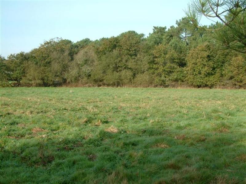 Terrain constructible à Cadaujac