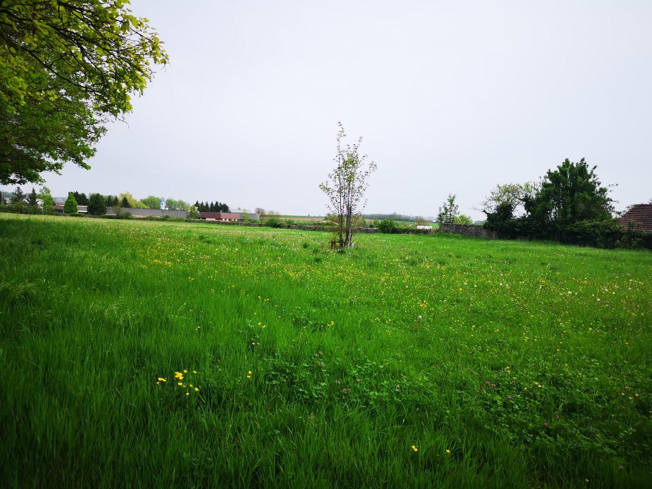 Terrain constructible à Ladoix-Serrigny