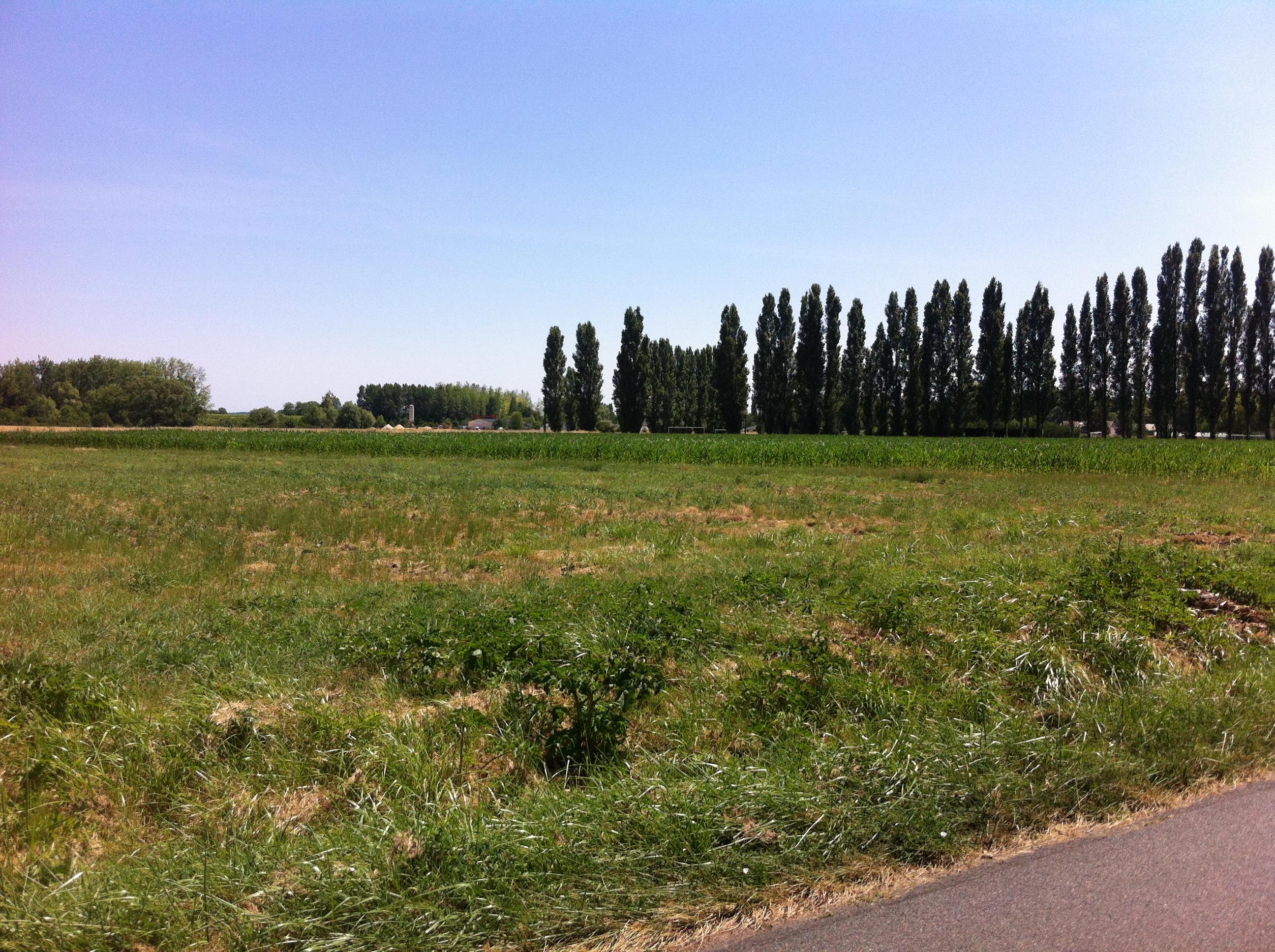 Terrain constructible à Bourg-d'Iré