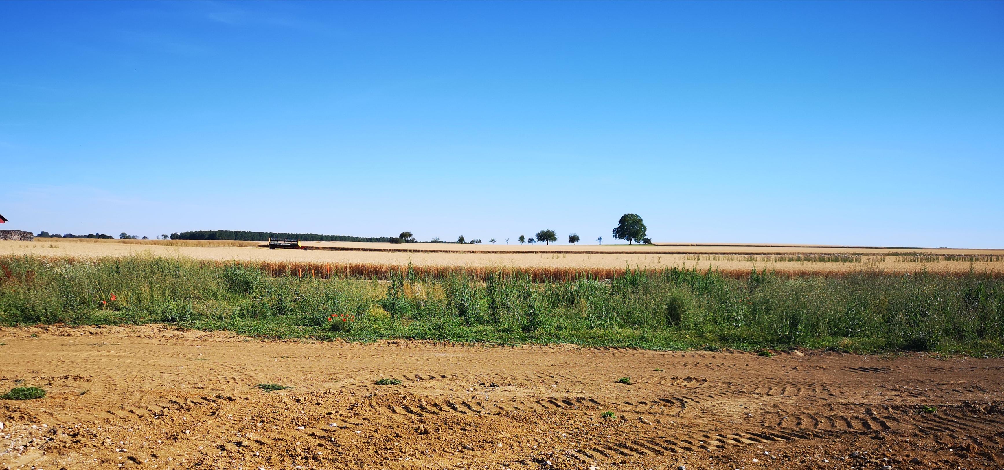 Terrain constructible à Arc-sur-Tille