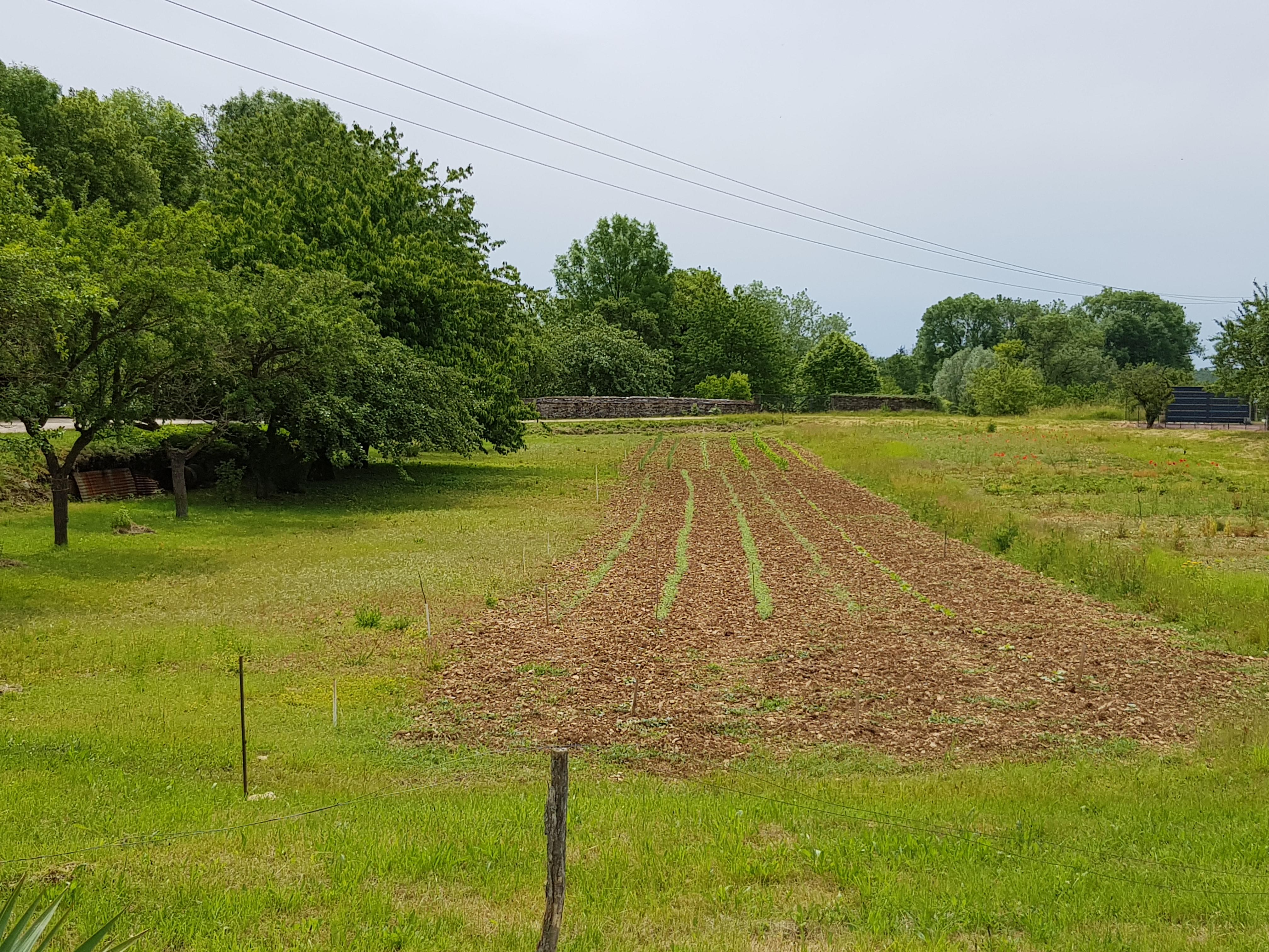 Terrain constructible à Selongey