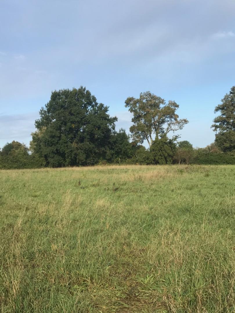 Terrain constructible à Chalonnes-sur-Loire