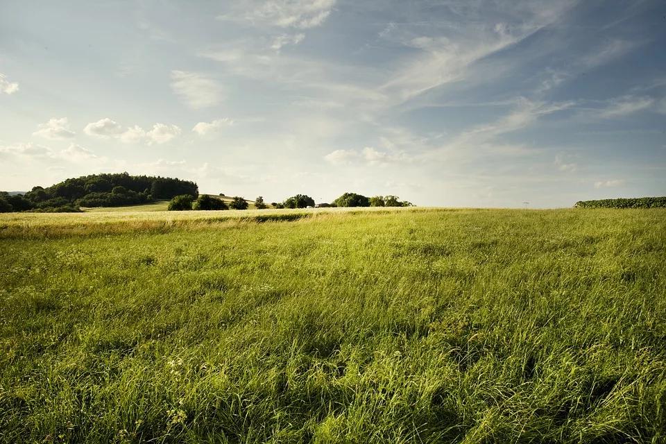 Terrain constructible à Fauverney
